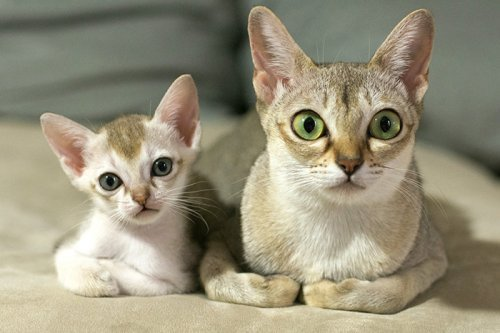 Как две капли: кошки и котята (29 фото)