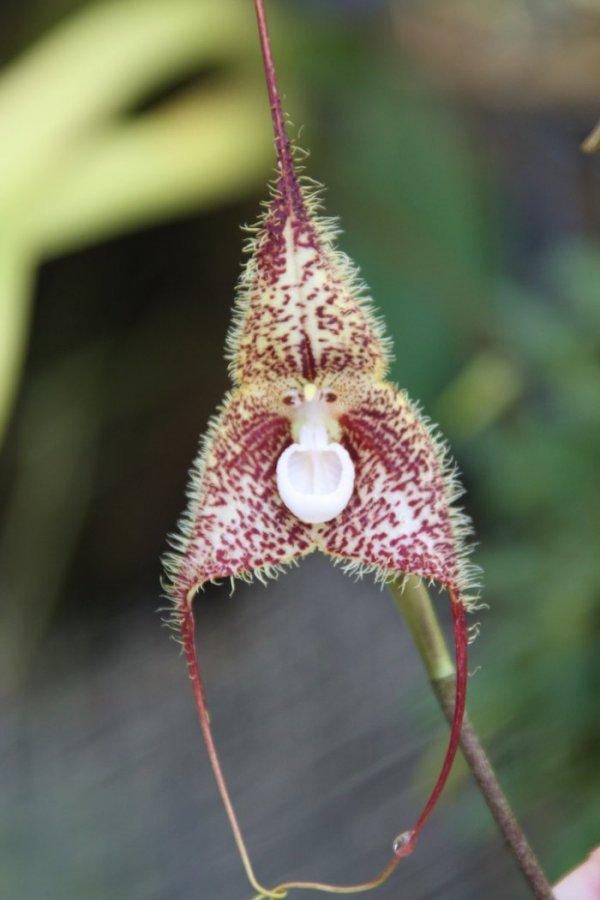 Выставка необычных орхидей в Aquamarine Fukushima (6 фото)