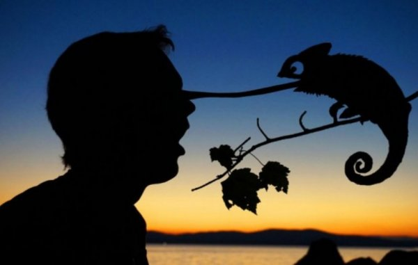 Забавные силуэты на фоне заката (10 фото)