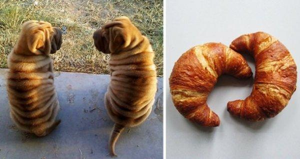 Собаки, поразительно похожие на кого-то или что-то другое (24 фото)