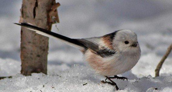 Птицы говорят предложениями