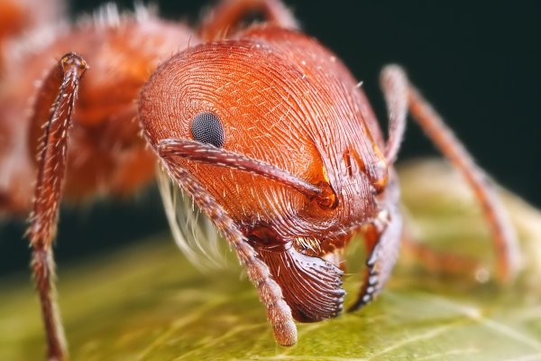 Учёные разработали методику получения топлива из муравьиной кислоты