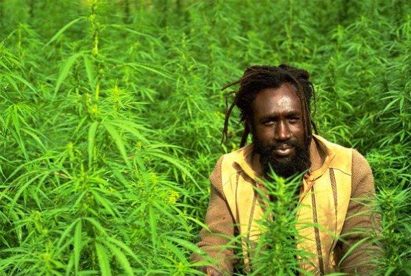 Американские учёные проинформировали о лекарственных свойствах марихуаны