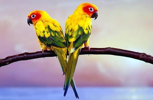 Попугаи – самые особенные и умные из всех пернатых