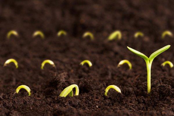 Учёные заняты сбором диких семян на случай апокалипсиса