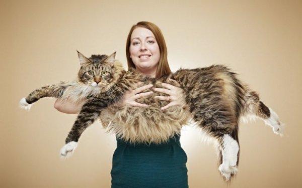В Британии проживает самая длинная кошка
