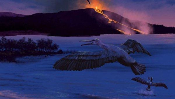 Учёные: В Арктике 90 млн лет назад жила зубастая птица