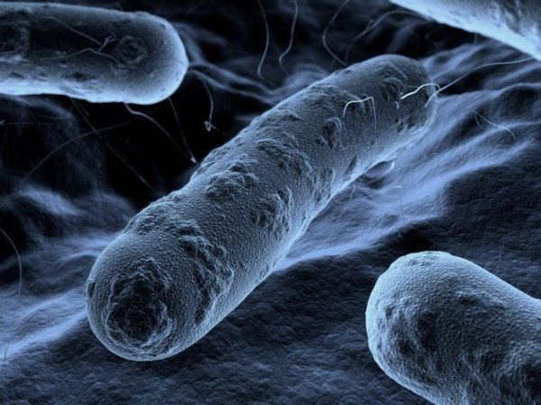 Электроактивые бактерии будут очищать стоки