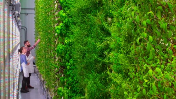 Вертикальные фермы Plenty позволяют собрать в 350 раз больший урожай
