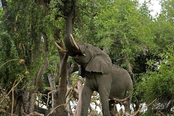 В Индии мужчина вырастил лес для слонов