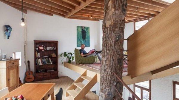 В США появился дом, построенный вокруг дуба