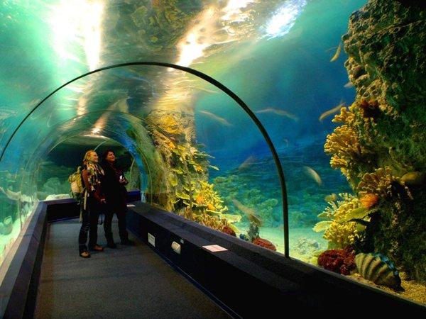 Сочинский океанариум – идеальное место для отдыха