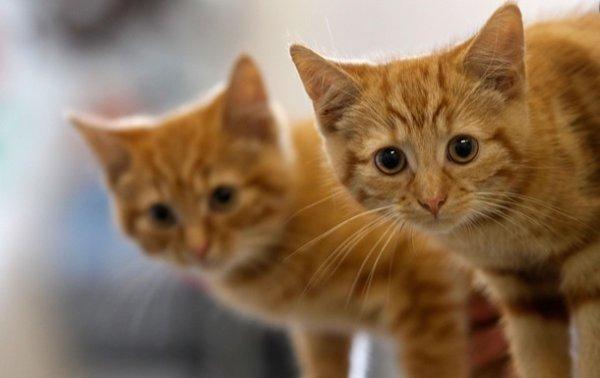 В Ираке окрыли отель для кошек