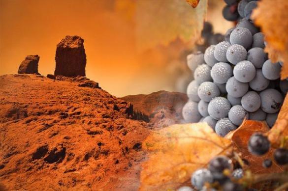 Грузия хочет выращивать на Марсе виноград