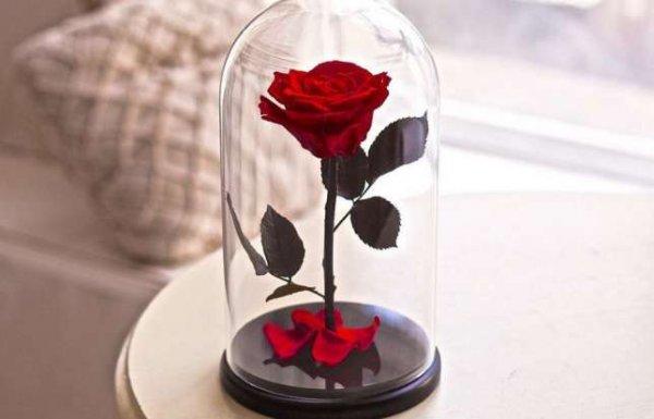 Роза в колбе – лучший подарок