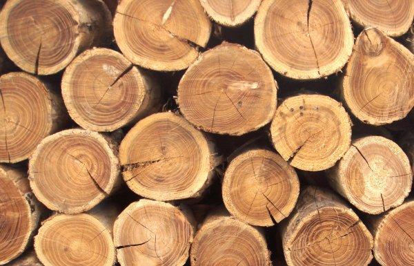 Китайские учёные придумали дерево, которое не горит