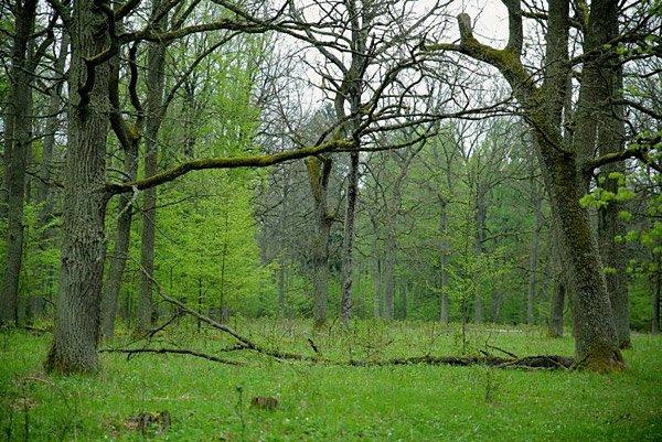 Беловежская пуща – один из самых больших лесов в Европе