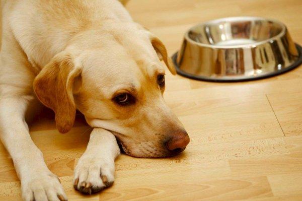 Отравление у собак: симптомы и первая помощь
