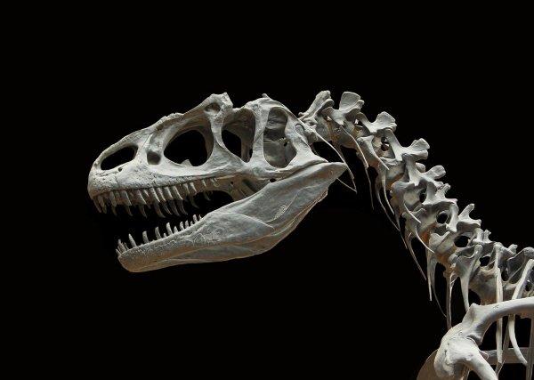 В Австралии нашли необычный скелет динозавра